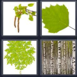 seis letras hojas y troncos