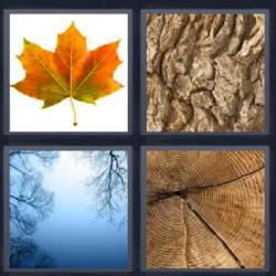 4 fotos 1 palabra tronco hoja seca