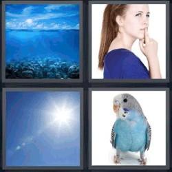4 fotos 1 palabra pájaro azul