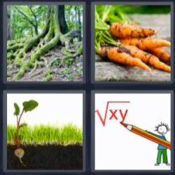 4 fotos una palabra zanahorias bosque planta