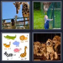 tres letras jirafa leones zoológico