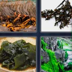 4 fotos 1 palabra plantas verdes
