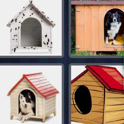 4 fotos 1 palabra caseta de perro