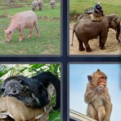 4 fotos 1 palabra elefante mono
