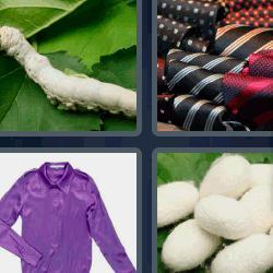 4 fotos 1 palabra gusano blanco