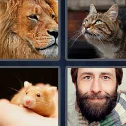 4 fotos 1 palabra león gato ratón barba