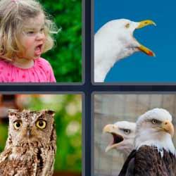 4 fotos 1 palabra pájaro niña búho águilas