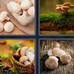 4 fotos 1 palabra champiñones o setas