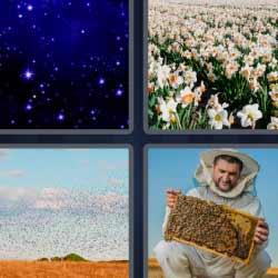 4 fotos 1 palabra flores estrellas abejas