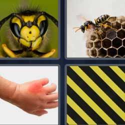 4 fotos 1 palabra insecto amarillo y negro