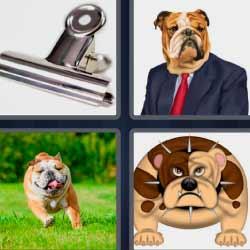 4 fotos 1 palabra perro con traje