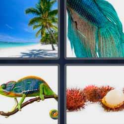 4 fotos 1 palabra pez azul playa camaleón