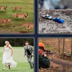 4fotos 1palabra cazador leopardos novios