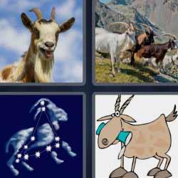 4 fotos 1 palabra ternero constelación