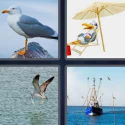 4 fotos una palabra pájaro ave sombrilla