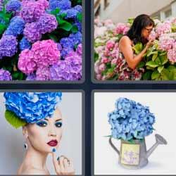 4fotos 1palabra flores azules y moradas regadera jardín