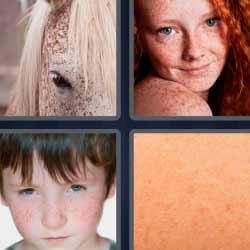 4 fotos una palabra caballo piel cara