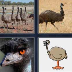 4 fotos 1 palabra avestruz