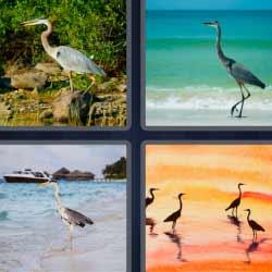4 fotos 1 palabra pájaros