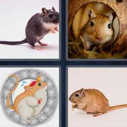 4 fotos 1 palabra ratón