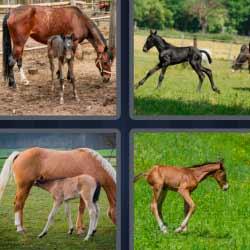 4 fotos 1 palabra caballo, yegua con su cría