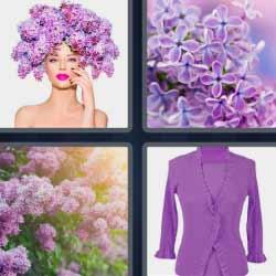 4 fotos 1 palabra 4 letras flores moradas