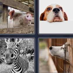 4 fotos 1 palabra cerdo cebra perro
