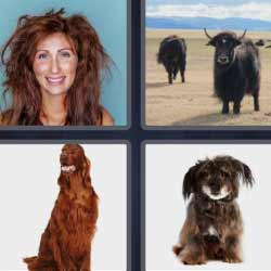 4 fotos 1 palabra perros mujer despeinada
