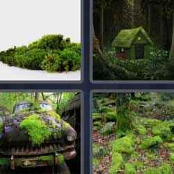 4 fotos 1 palabra hierba casa bosque
